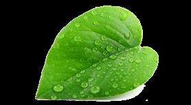 mevsimlik-dogal-kaliteli-urunler-yesil-yaprak